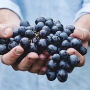 Two hands holding a bundle of grapes
